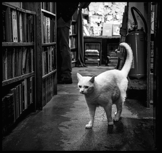 shakespeare and company 2