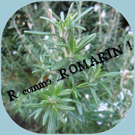 R comme Romarin