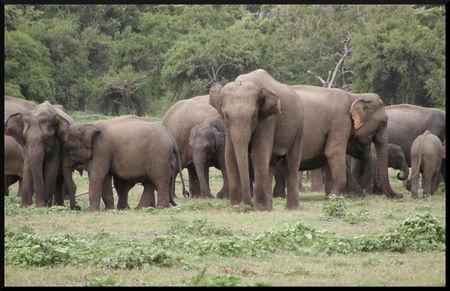 elephant_asie_2