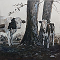 vaches__