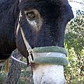 Zou ! la balade en âne