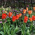 Les tulipes, fin mars