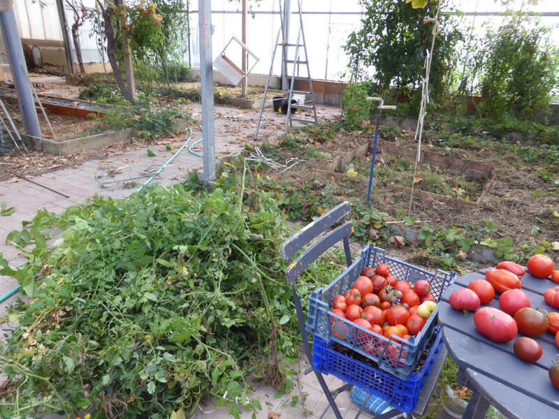 5-serre, tomates (1)
