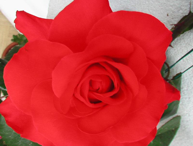 fleurs 069
