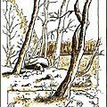 Forêt en hivers