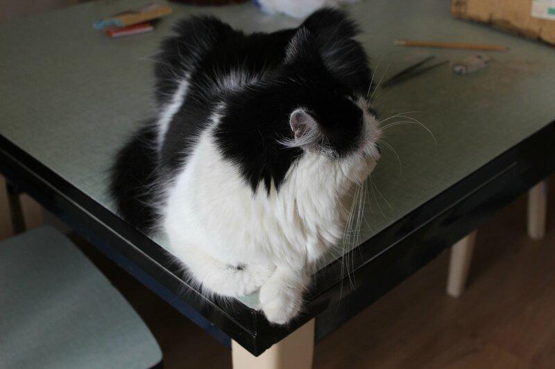 tonnelle chat