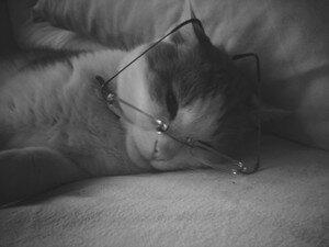 Mimi_studieux