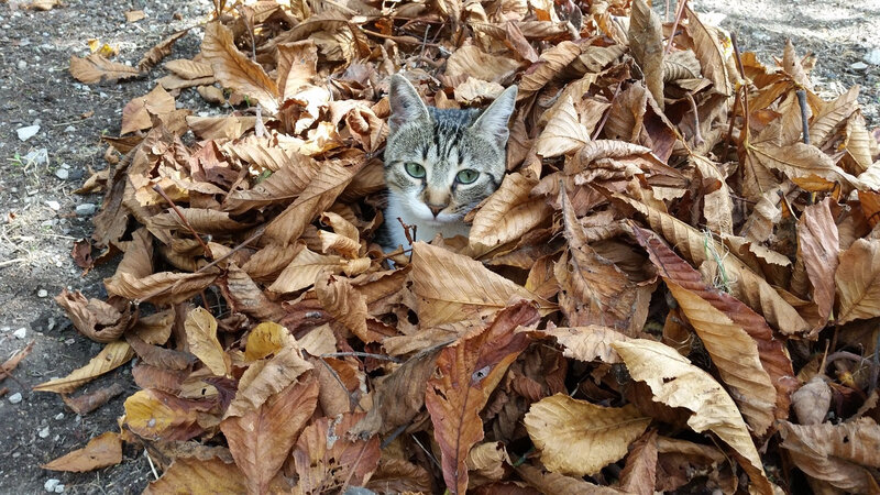 chat feuilles