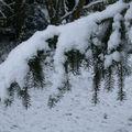 Ici aussi, il neige !