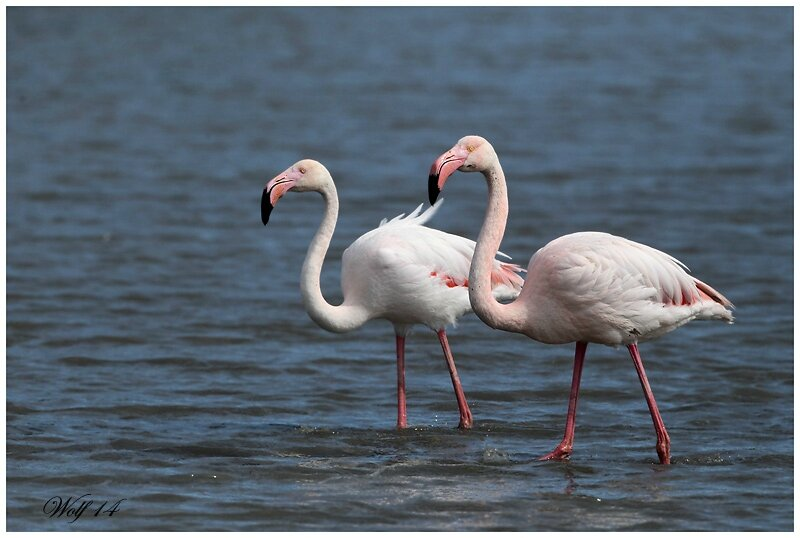 flamant-rose14-02