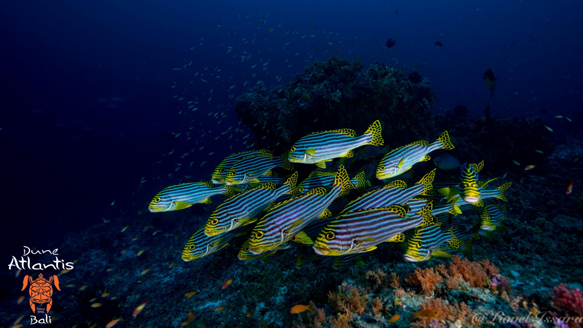 Plongée Sous Marine Bali Une éxperience Magique Aventure