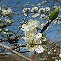 jardin mars 2012 (4)
