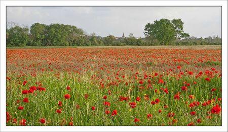 champ coquelicots eglise paysage 180512 2