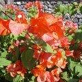 fleurs2 (idem)