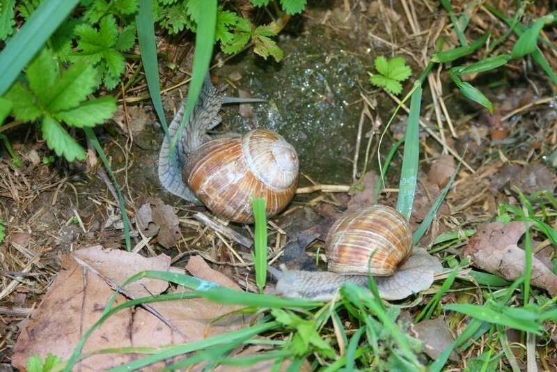 Escargots 1