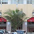 Le pub du palmier en zinc