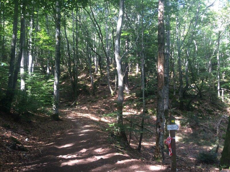 passage dans les bois