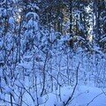 PremNeige_061228_13