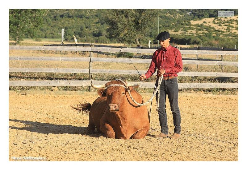 Photos JMP©Koufra 12 - El Rancho - Le Mas de Sisco - 18082020 - 0023