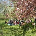 Central park : le poumon de manhattan