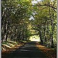Forêt de la guerche.