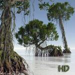 01 Dagobah mangrove tree rhyzophora 3D Star Wars C4D max obj 3ds icon