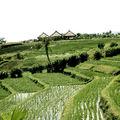 Yeh Gangga - rizières près de l'hôtel