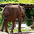 Elephant-(6)HR