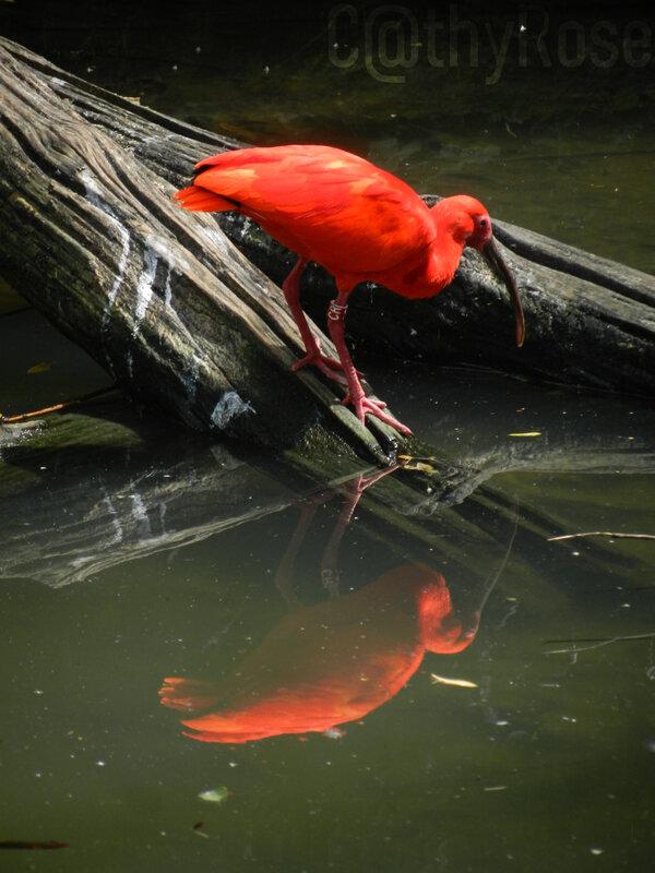 && ibis (4)