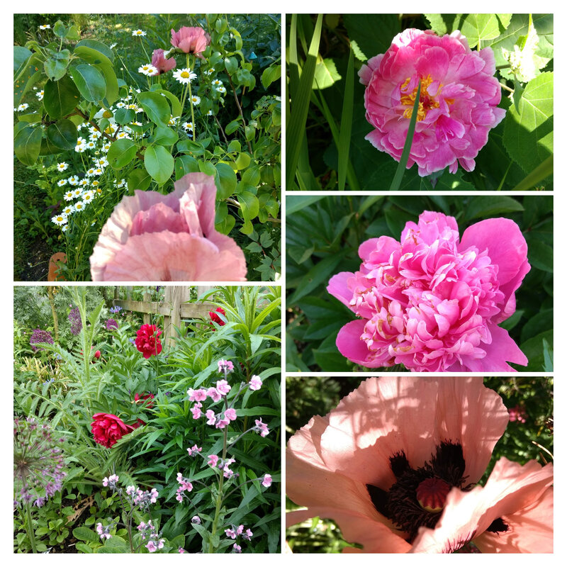 IMG_20190520_190138150-COLLAGE