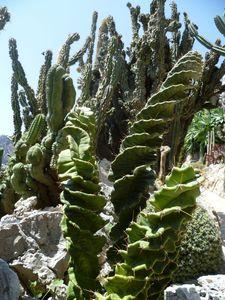 JE__Cactus2_