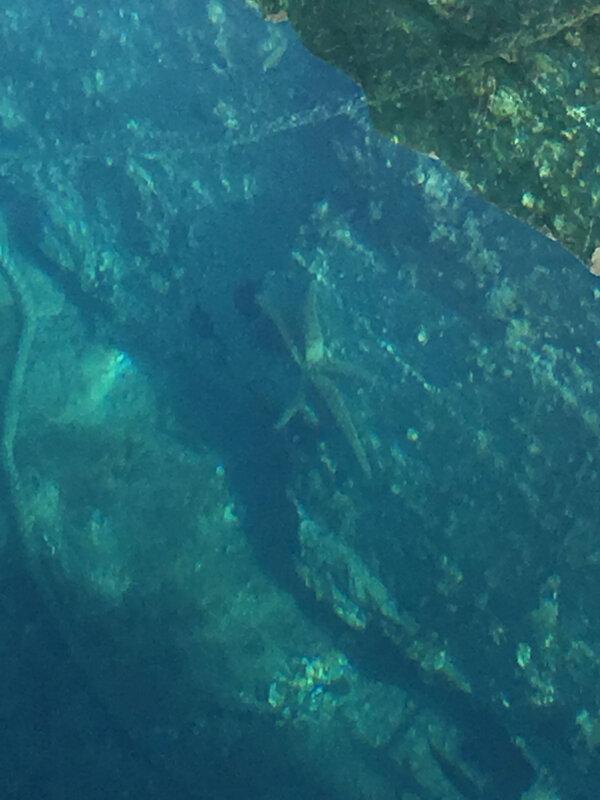 Sali,une étoile de mer chasse les oursins, mardi 17 mars 2020)