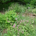 2008 05 30 Quelques fleurs du jardin botanique