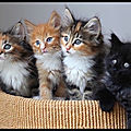 chatons diversite