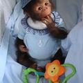 kouky bébé singe reborn n5