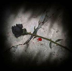 rose noire 2
