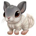 icon_chinchilla_adult_mosaicangorawhite_128-2f7611157dc1ebc0