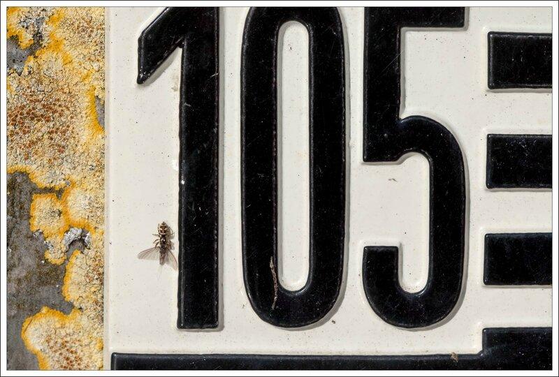 ville 105 araign zebre proie 12 070515