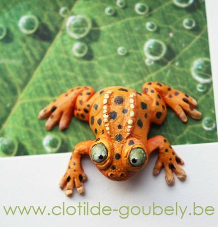 grenouille-orange