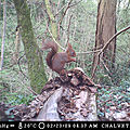 écureuil assis, le 28 mars 2017