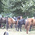 équitation de pleine nature - rallye équestre (44)
