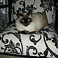 chat fauteuil_6