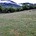 Prairie près des granges d'Issaux...