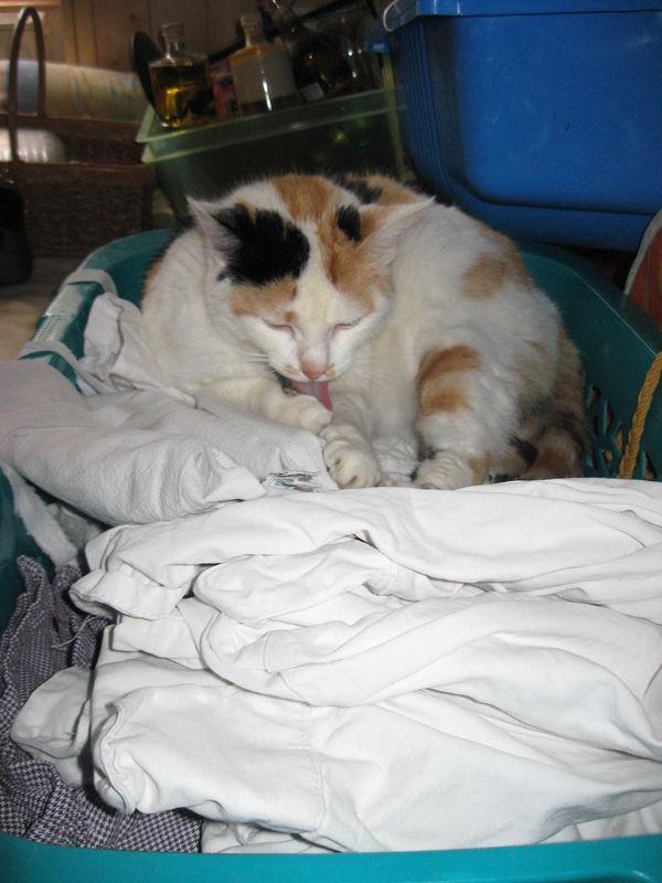 chat doux