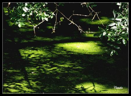 ombres_chinoise_sur_lentilles_vertes