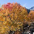 015 Belles couleurs d'automne