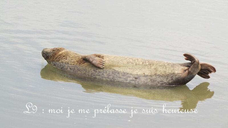 Phoque L9 - 6 juin 8 cale Mordreuc 005-