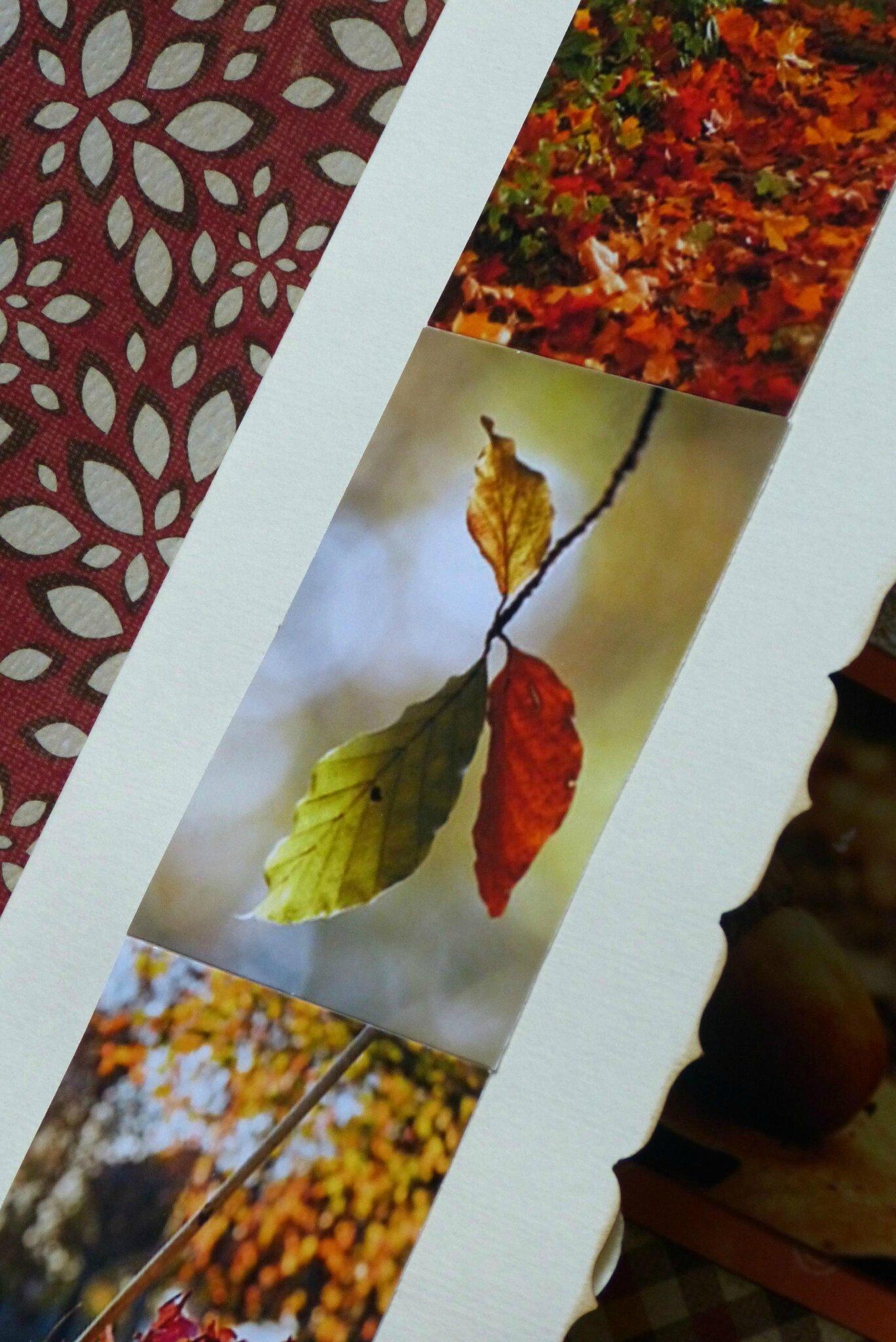 Couleurs d'automne (30)