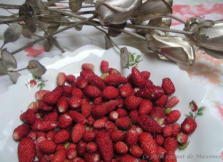 fraises_des_bois