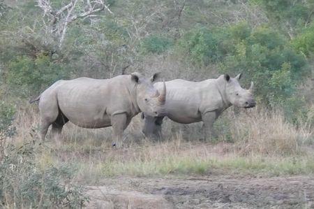hluhluwe_rhino_1